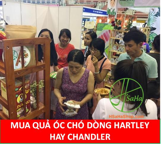 NÊN MUA QUẢ ÓC CHÓ DÒNG HARTLEY HAY CHANDLER