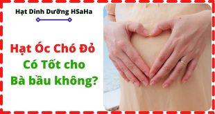 hat-oc-cho-do-co-tot-cho-ba-bau-khong-HSaHa